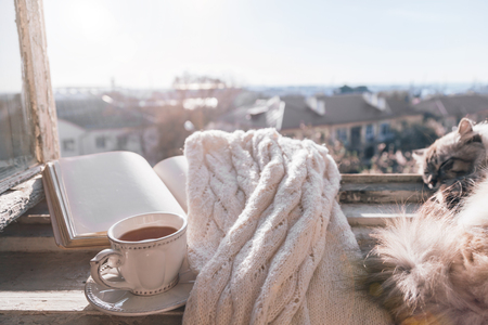 Cats sleeping in warm sunlight on the window sill by opened book, cup of tea or coffee, glasses and knitted sweater. Cozy spring weekend concept. The text on pages is not recognizable.