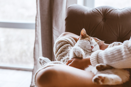Cute cat sleeping on owners's hands one winter day. Girl relaxing with her pet on a sofa. Cosy scene, hygge concept.
