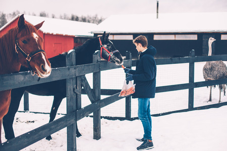 Photo of teenage boy feeding a horse on the ranch in cold snowy day. Winter trip to countryside.