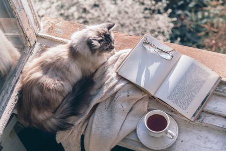 Chats dormant dans la lumière du soleil chaude sur le rebord de la fenêtre par livre ouvert, tasse de thé ou de café, verres et pull en tricot. Concept de week-end de printemps confortable. Le texte des pages n'est pas reconnaissable.