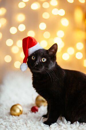 Black cat in Santa hat sitting over holiday lights. Pets Christmas concept. Kitten on Xmas studio bokeh background.