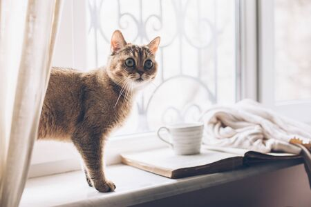 Warm and cozy window seat with opened book, sweater and coffee. Winter weekend with cat at home. Cozy scene, hygge concept.
