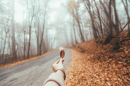 POV of woman's hand holding fall leaf over road in magic forest one foggy autumn day Stok Fotoğraf