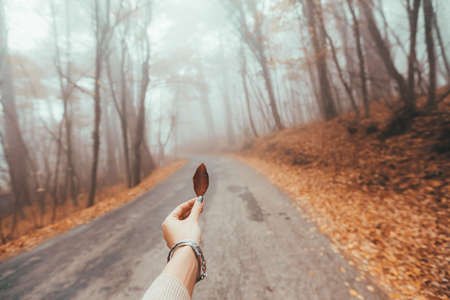 POV of woman's hand holding fall leaf over road in magic forest one foggy autumn day Standard-Bild