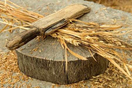 The ancient home tool which our ancestors was used for wheat peeling Stock Photo