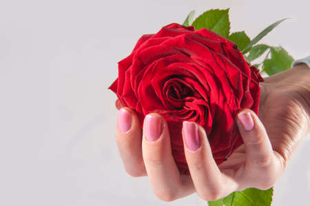 Red rose in the woman hand