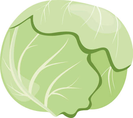 Head of cabbage isolated on a white background Vector