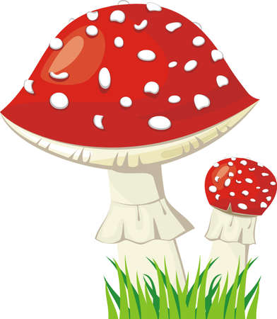 Two fly agaric in a grass Stock Vector - 21316307