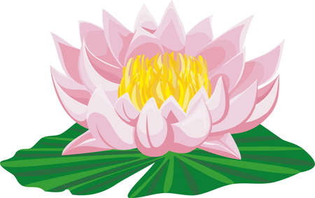 Pink lotus and leaf isolated on white background  Vector illustration  Illustration