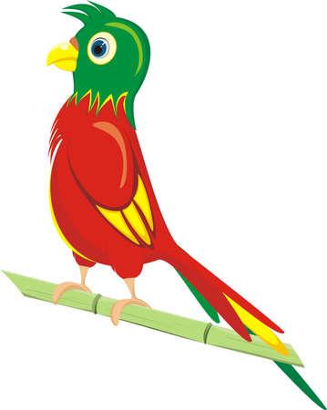 A parrot on white background Illustration
