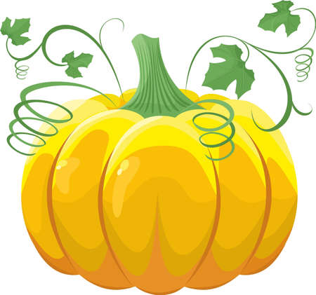 Pumpkin with leaves on white background Vector