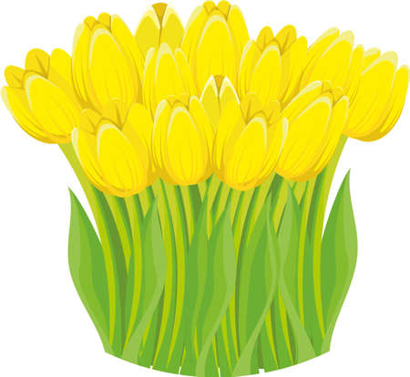 A bunch of lovely bright yellow spring tulips isolated on white background