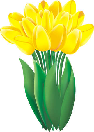A bunch of lovely bright yellow spring tulips