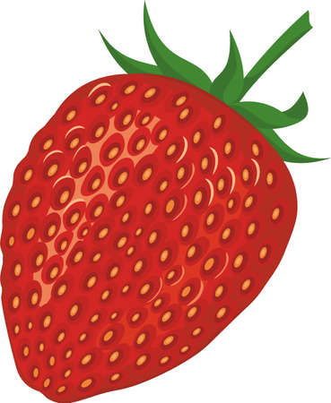 Ripe strawberries isolated on white background. Vector illustration