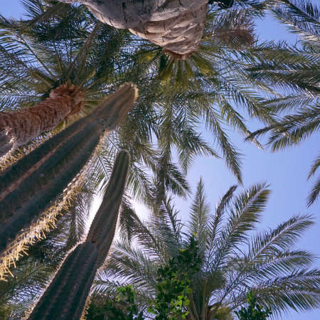 Palm trees and cactus in Brisbane, Australia Stock Photo