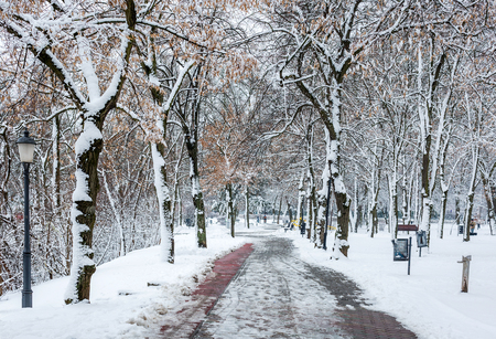 Path in winter park. Benches and trees covered by snow. Salt lake, Sosto, Hungary