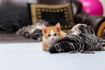 Cute red kitten sitting on the bed near plaid. Space for text