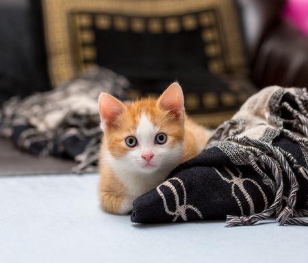 Cute red kitten sitting on the bed near plaid Zdjęcie Seryjne