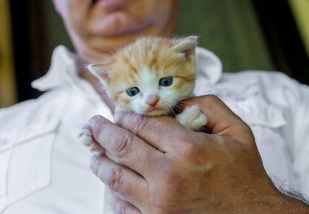 Young red kitten in caring man hands