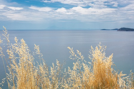 Yellow dry grass on blue sea and cloudy sky background. View from the hill Imagens