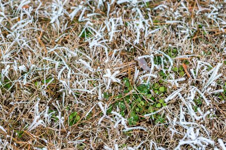 Ice crystals on dry grass and green leaves. Frosty grass nature background. Selective focus Imagens
