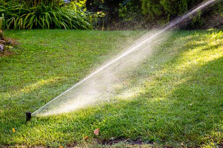 Automatic irrigation system watering green grass in summer sunny day. Lawn sprinkler spaying water