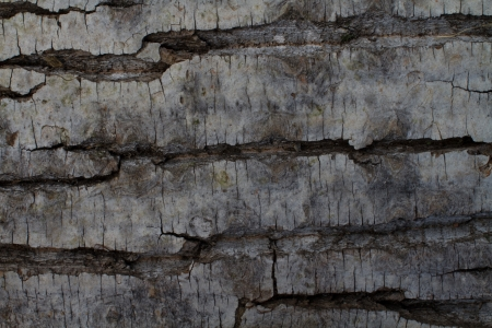Background from the bark of pine tree Stock Photo - 14569316