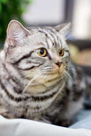 Gray fluffy cat