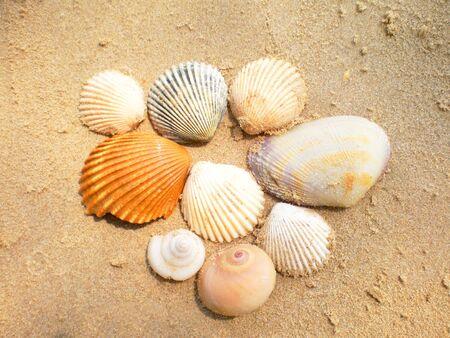 Zeeschelpen op nat geel zand