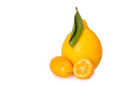 cantle: Tashkent lemon and kumquat isolated on white  Stock Photo