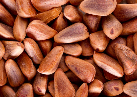 the taiga: Background from grains taiga cedar nuts