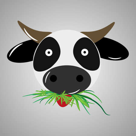 stoned: stoned cow