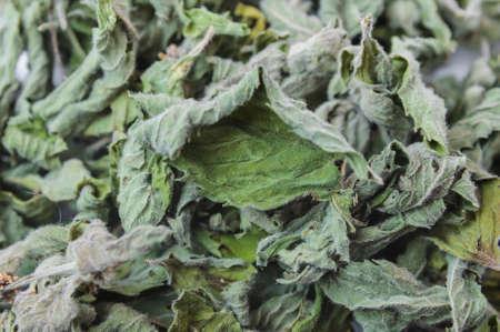 Dried common horehound herb (Marrubium vulgare), background