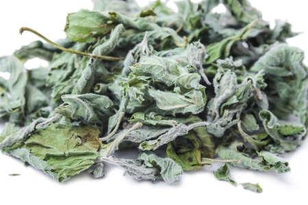 Dried common horehound herb (Marrubium vulgare) isolated on white background Reklamní fotografie