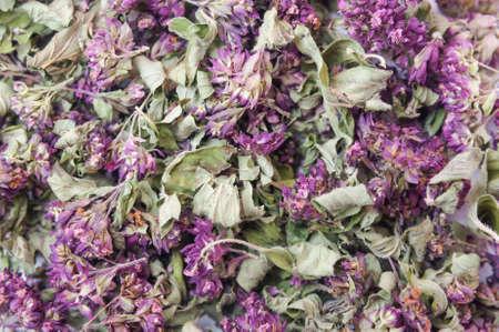 Erba asciutta Origanum vulgare sfondo Archivio Fotografico - 77659979