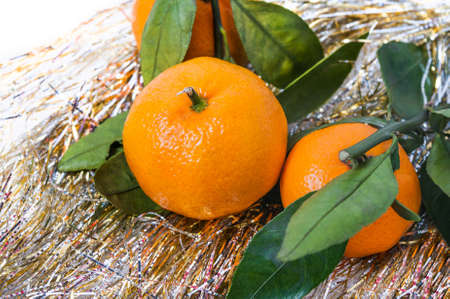 Tangerines clementines in the background of a festive Christmas Golden tinsel