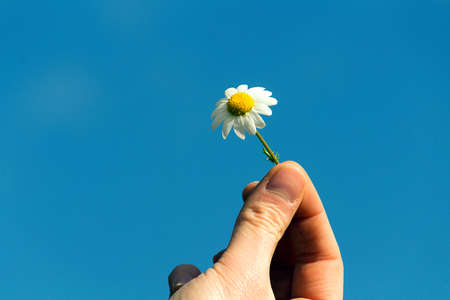 holding daisy in blue