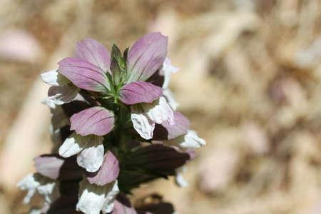 plant floral detail