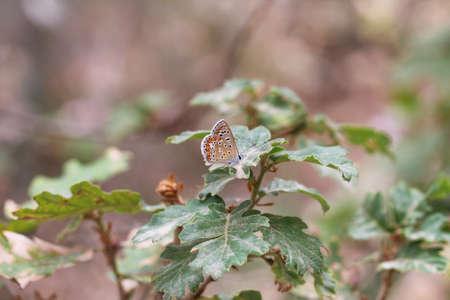 butterfly wildlife