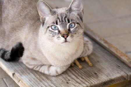 drumsticks: cat with drumsticks Stock Photo