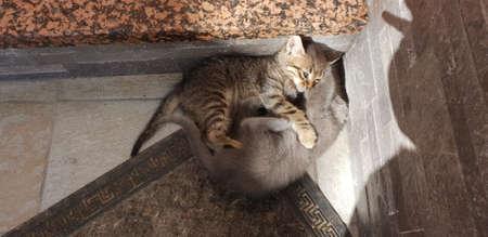 wild kittens playing
