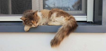 wild cat sleeping