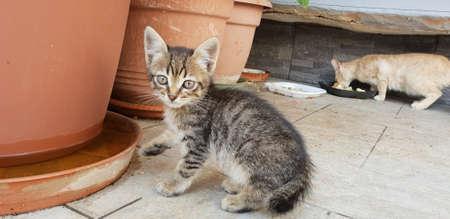 wild kitten portrait