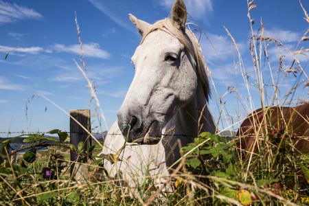 irish countryside: Irish Horse Stock Photo