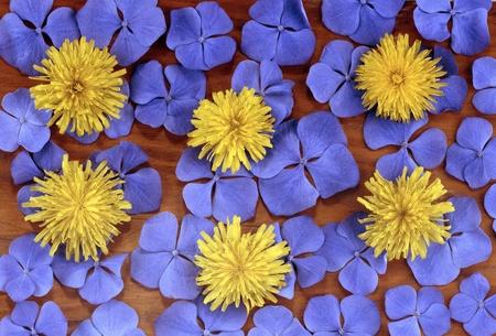 flowers composition photo