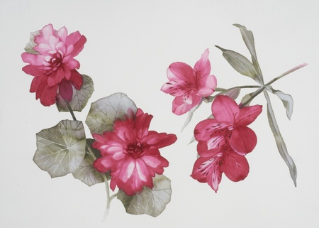 watercolour painting: Color illustration of flowers in watercolor paintings
