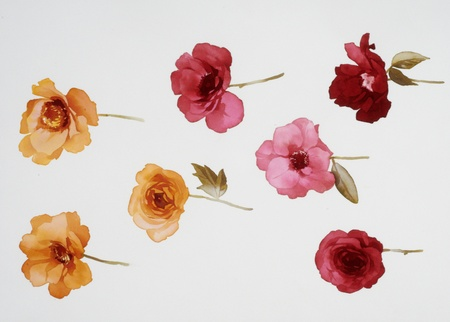 Color illustration of flowers in watercolor paintings illustration