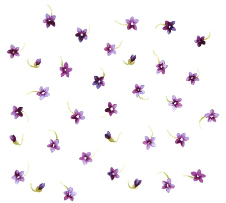 painterly: Color illustration of flowers in watercolor paintings