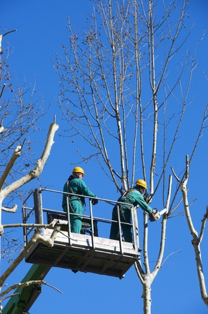 pruning: men pruning with a chainsaw Editorial