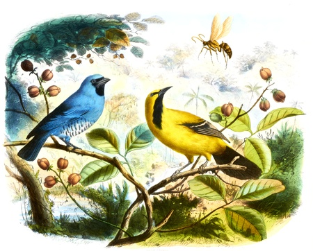 wild canary: colored bird in withe background Stock Photo